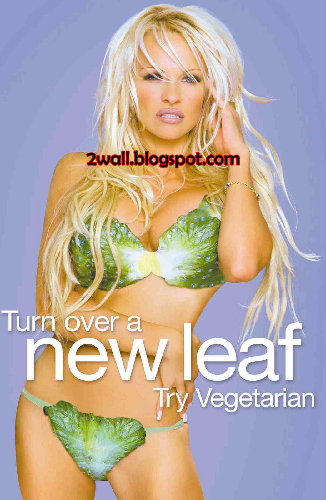 http://1.bp.blogspot.com/_3s5CHSQ3vWY/TSCrO3n1ZjI/AAAAAAAAAYk/EDrTEkOBbfI/s1600/Pamela_Anderson%2Bcopy.jpg