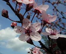 Un timido approccio di primavera....
