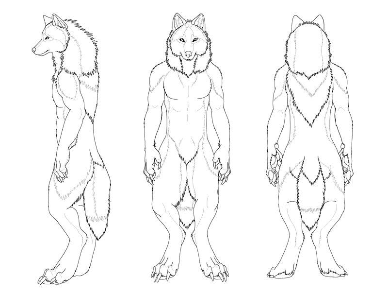 Anthro Arctic Wolf pictures for a Wolf race