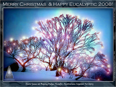 Snow Gums (Eucalyptus pauciflora ssp. niphophila) at Bogong Ridge, Thredbo, ACT / Eucaliptos de las Nieves en Bogong Ridge, Thredbo, Canberra / Merry Christmas and Happy Eucalyptic Year 2008 / Feliz Navidad y Prospero Año Eucalíptico 2008 / GIT Forestry Consulting, Consultoría y Servicios de Ingeniería Agroforestal, Lugo, Galicia, España, Spain