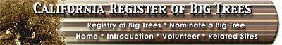 Giant Eucalyptus / Giant Trees / California Registry of Big Trees / California Register of Big Trees / Arboles Gigantes / Eucaliptos Gigantes