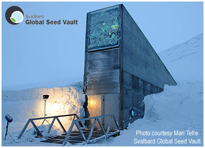 Eucalyptus largiflorens at the Global Seed Vault, Longyearbyen, Spitsbergen, Svalbard, Norway / Northernmost Cold Hardy Eucalyptus at 78ºN