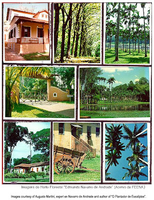 Horto Florestal de Rio Claro / Floresta Estadual Navarro de Andrade / Forestry Station at Rio Claro / Navarro de Andrade State Forest / Rio Claro, Sao Paulo, Brazil