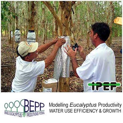 Water Absorption, Transpiration and Water Use Efficiency in Clonal Eucalyptus Plantations / Absorcion, transpiracion y eficiencia en el uso del agua de las plantaciones clonales de Eucalyptus / Jose Luiz Stape (North Carolina State University), Dan Binkley (Colorado State University), Mike Ryan (USDA) et al / BEPP - Brazil Eucalyptus Potential Productivity Project: Influence of water, nutrients and stand uniformity on wood production / BEPP - Proyecto de Modelizacion de la Productividad Potencial del Eucalipto: Influencia de la disponibilidad de agua, nutrientes y la homogeneidad del rodal en la produccion de madera / Gustavo Iglesias Trabado, Roberto Carballeira Tenreiro and Javier Folgueira Lozano / GIT Forestry Consulting SL, Consultoría y Servicios de Ingeniería Agroforestal, Lugo, Galicia, España, Spain / Eucalyptologics, information resources on Eucalyptus cultivation around the world / Eucalyptologics, recursos de informacion sobre el cultivo del eucalipto en el mundo