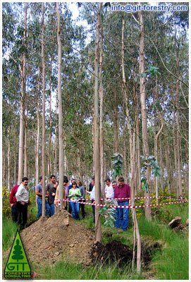 Norfor is FSC certified / ENCE increases FSC certified Eucalyptus timberland / ENCE is a FSC certified sustainable forestry management company / Norfor renueva su certificado FSC de Gestion Forestal Sostenible / ENCE aumenta su recurso forestal certificado por FSC / Environmentalist Myths on FSC Certification / Mitos ecologistas sobre la certificacion FSC / Gustavo Iglesias Trabado, Roberto Carballeira Tenreiro & Javier Folgueira Lozano / GIT Forestry Consulting SL, Consultoría y Servicios de Ingeniería Agroforestal, Galicia, España, Spain / Eucalyptologics, information resources on Eucalyptus cultivation around the world / Eucalyptologics, recursos de informacion sobre el cultivo del eucalipto en el mundo