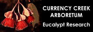 Dean Nicolle - Currency Creek Arboretum - Eucalypt Research / Eucalyptologics, Information resources on sustainable Eucalypt cultivation worldwide / Recursos de informacion sobre el cultivo sostenible del eucalipto en el mundo / GIT Forestry Consulting, Lugo, Galicia, España, Spain