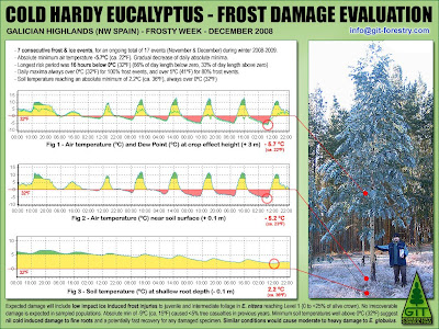 Cold hardy Eucalyptus nitens & Eucalyptus globulus frost damage assessment methodology by GIT / Método GIT para evaluacion de daños por helada a Eucalyptus nitens, Eucalyptus globulus y otras especies de eucalipto resistentes al frio / Gustavo Iglesias Trabado & Roberto Carballeira Tenreiro & Javier Folgueira Lozano / GIT Forestry Consulting, Consultoría y Servicios de Ingeniería Agroforestal, Galicia, España, Spain / Eucalyptologics, information resources on Eucalyptus cultivation around the world / Eucalyptologics, recursos de informacion sobre el cultivo del eucalipto en el mundo