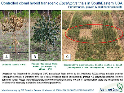ArborGen / Genetically modified Eucalyptus / ArborGen Cold hardy transgenic hybrid Eucalyptus urograndis trials in Alabama, Florida and South Carolina / / Gustavo Iglesias Trabado, Roberto Carballeira Tenreiro & Javier Folgueira Lozano / GIT Forestry Consulting SL, Consultoría y Servicios de Ingeniería Agroforestal, Galicia, España, Spain / Eucalyptologics, information resources on Eucalyptus cultivation around the world / Eucalyptologics, recursos de informacion sobre el cultivo del eucalipto en el mundo