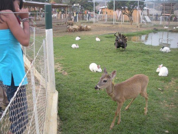 Mini granjas de animales.