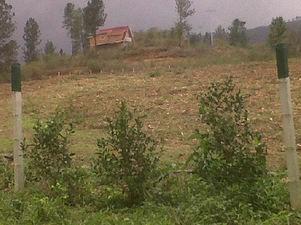 Proyecto lomas de nirgua complejo agro turistico Lagunas para cachamas