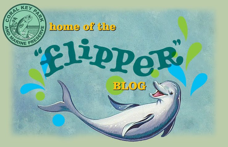 the flipper blog