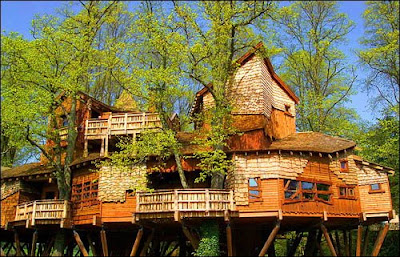 Treehouses: Not Just for Kids Anymore!