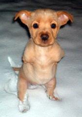Faith la perrita que nacio sin patas delanteras Dog