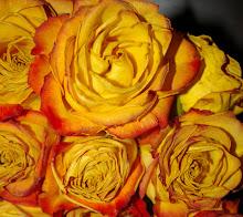 Jody's roses