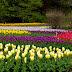 Voglia di tulipani
