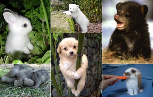 Animalitos bebés