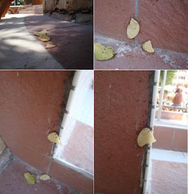Hormigas cargando una papa frita