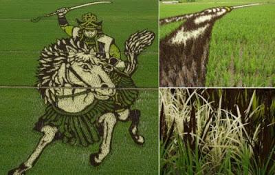 Arte en campos de arroz