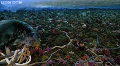 Gusanos monstruosos y estrellas de mar