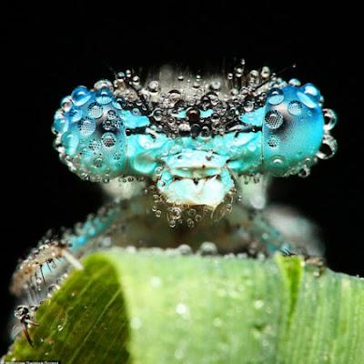 Fotos de Insectos cubiertos de gotas de agua