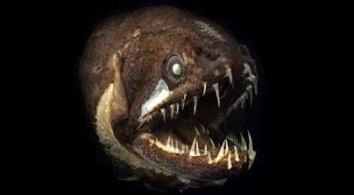 Criaturas extrañas del fondo del mar