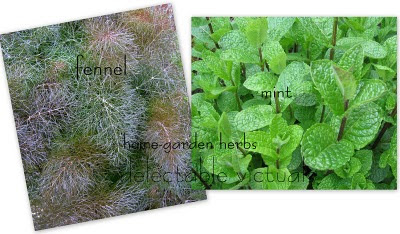 home-garden herbs mint fennel