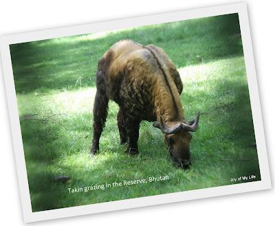takin bhutan national animal