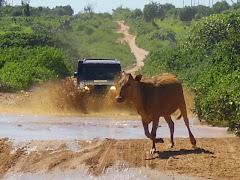 Pelas estradas matogrossenses
