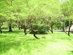 E disse: Produza a terra relva, ervas que dêem semente e árvores frutíferas que dêem fruto (...)