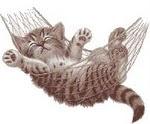 Stressed Kitty!