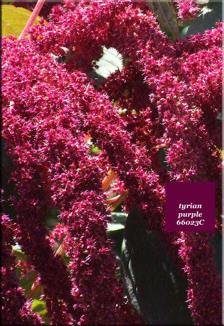 in terms of colour nature 39 s purple feast blooms and