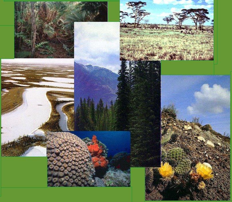 Ecosistemas qu es un ecosistema for Piletas de agua salada en zona sur