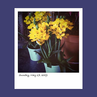 iPhone polaroid, yellow flowers