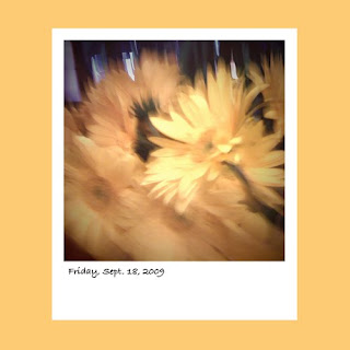 iPhone polaroid, flowers