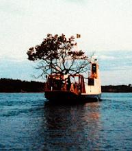 árbol en barco