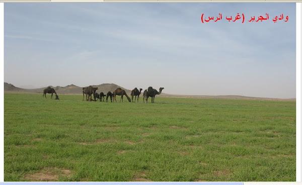 وادي الجرير (غرب الرس )