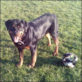 Roxy with new found ball