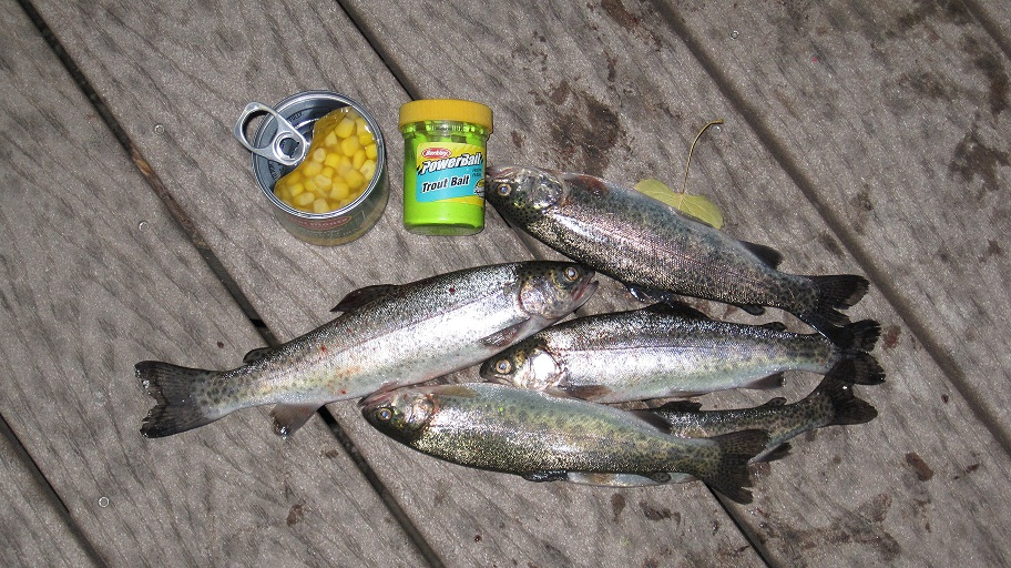 City of allen fishing powerbait lands four trout corn for Trout fishing with powerbait
