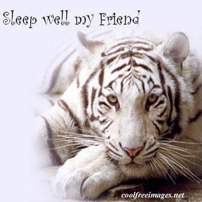 forgot pic lol sleep well