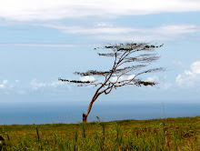 Lone Tree, Hawaii