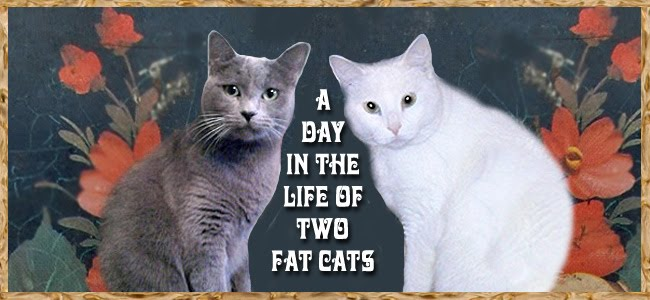 The Day in the Life of Two Fat Cats