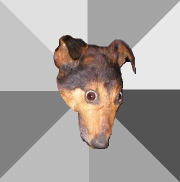 My Dog Is Making Me Depressed