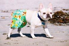 [Doggie+Board+Shorts+at+Loews.jpg]