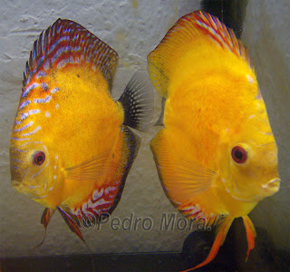 Los peces de pedro for Comida peces estanque barata
