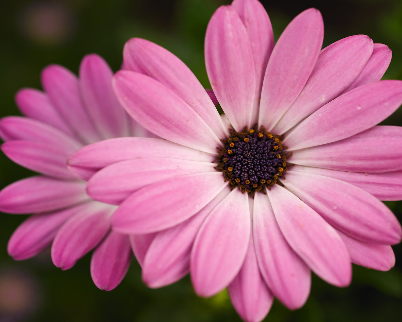 JulesDesigns: Summer time, flower time...