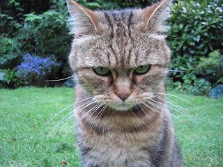 kucing padin