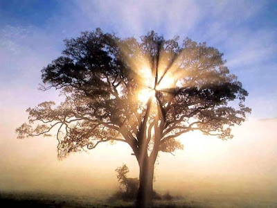 http://1.bp.blogspot.com/_4A9r9yKkkNs/S0mteRU0XHI/AAAAAAAAEfg/srX5nf77NBE/s400/Light+Tree+Gaia+Spirit.jpg