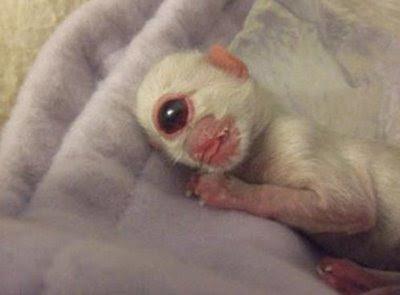 Weirdest Deformed Animals Of The World