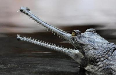 Weirdest Animals On Earth