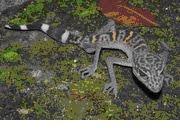 Ranas dentadas y otras 162 especies descubren en Mekong